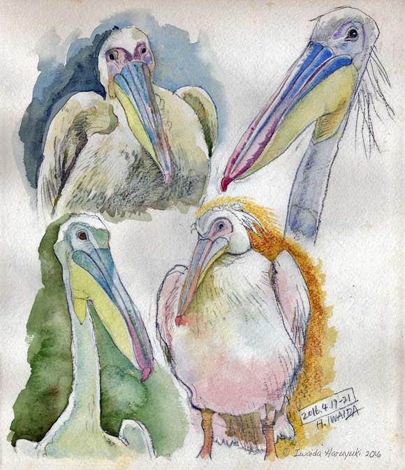 Pelican01_2