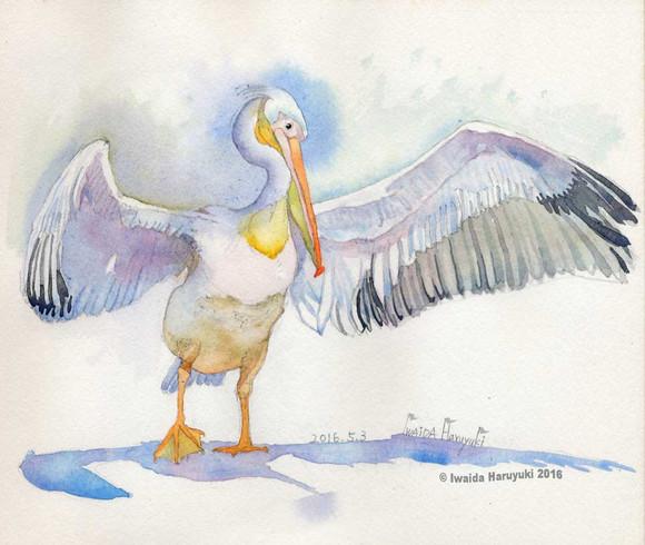 Pelican03